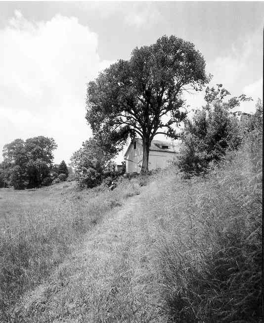 Tree2_3
